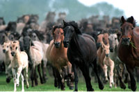 Einlauf der Herde