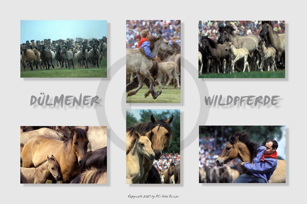 Fang der Jährlingshengste - Poster mit 6 Bildern