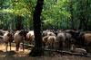 Ruhen im Wald