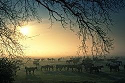 Morgennebel über der Wildbahn
