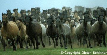 Foto einer laufenden Herde